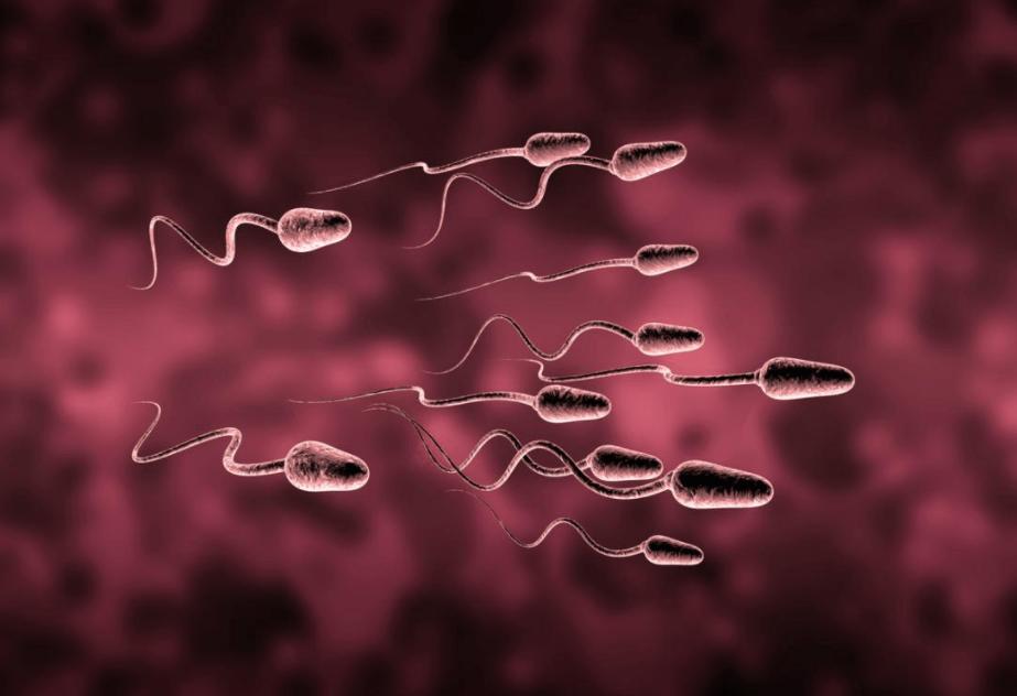 Formas De Aumentar A Contagem De Espermatozóides Naturalmente