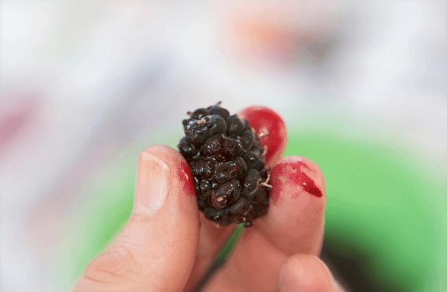 11 Frutas Ricas em Ferro para Aumentar os seus Níveis de Ferro e hemoglobina