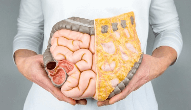 Amilase: Os 8 Benefícios Notáveis da Enzima Metabólica