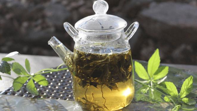 Chá De Jiaogulan