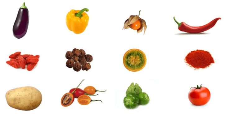 Vegetais Solanaceae