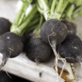 O Rabanete Negro é Rico Em Flavonóides Antioxidantes, Glucosinatos E ácidos Fenólicos.
