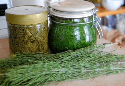 Conheça Os Benefícios Do Chá De Cavalinha, Equisetum