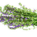 23 Benefícios Do Hissopo (Hyssopus Officinalis) Para A Saúde