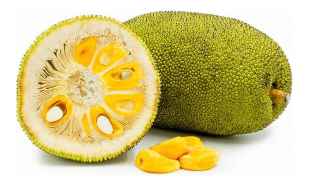 Jaca é A Fruta De Uma árvore, A Jaqueira, De Nome Científico Artocarpus Heterophyllus
