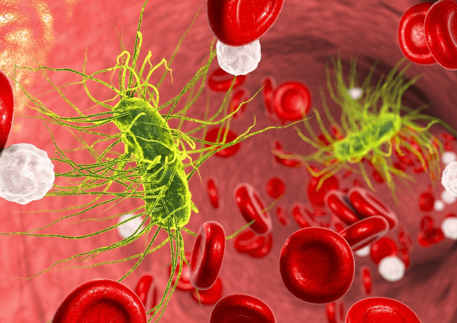 Remédios Naturais Para Combater A Bacteremia (Bactérias No Sangue) Naturalmente