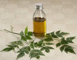 óleo Essencial De Azadirachta Indica