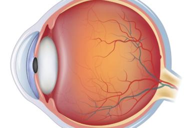 A Estrutura Do Olho