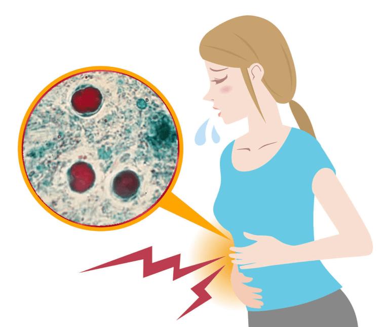 Blastocystis hominis: o que é, sintomas e tratamentos